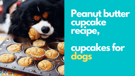 peanut butter cupcakes, easy dog cupcakes recipe for your dog